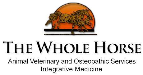 The Whole Horse Veterinary Clinic / Central Texas Equine